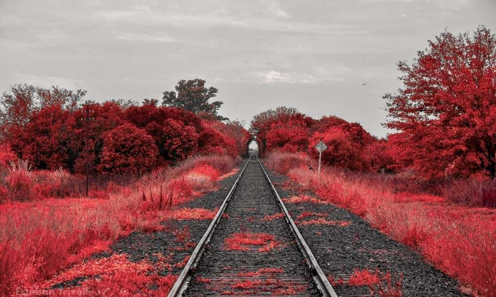 train-tracks-red-trees-feeling-something-isnt-right-career